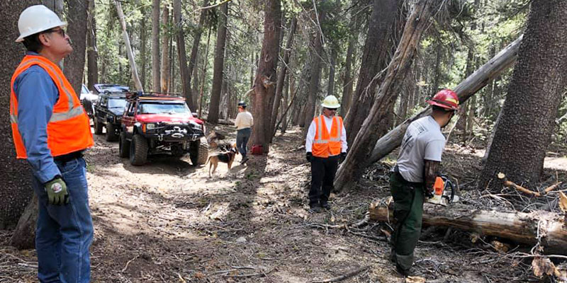 Members of the Kingsburg 4 Wheel Drive Club work to clear a trail through the forest.